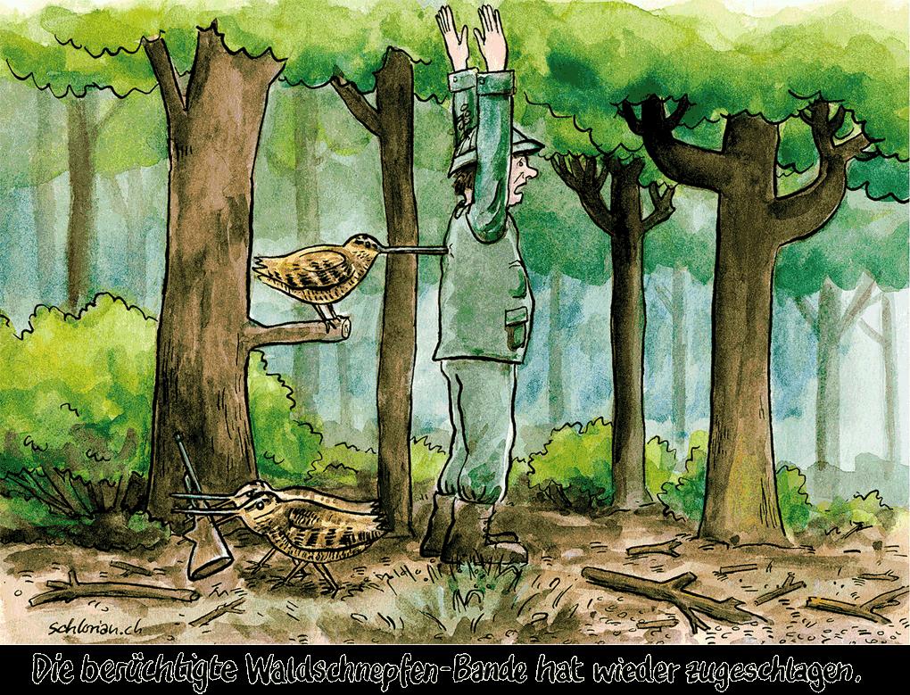 Waldschnepfen