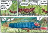 Ameisen finden Riesenraupe