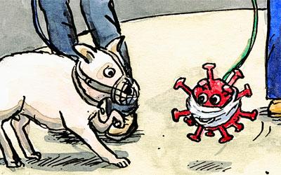 Cartoon Hund und Corona