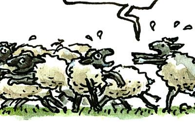 Cartoon Schafe in Panik